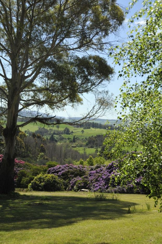 Rhododendron Reserve, Lalla, Tasmania